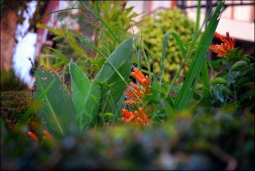 Bunga di pagi hari